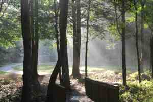 asbury_morning_mist